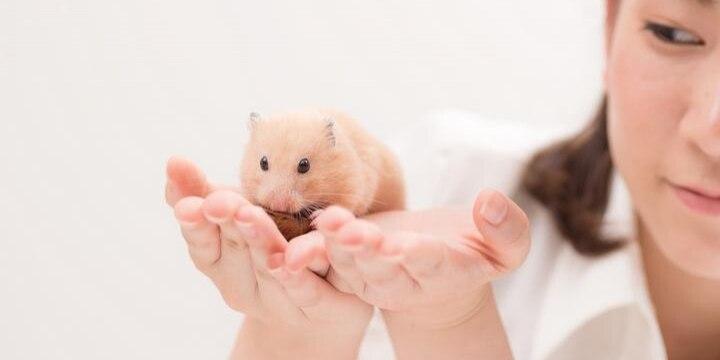 寂しい一人暮らしOL、「小動物」飼育で気を紛らわせたい...バレたらどうなる?